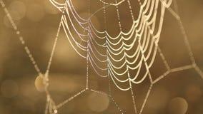 Wassertropfen auf Spinnenweb stock video