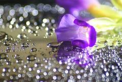 Wassertropfen, bokeh und purpurrote Blume Stockfoto
