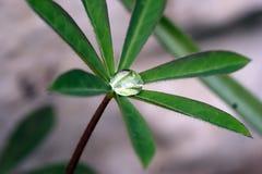Wassertropfen der Blätter lizenzfreie stockfotos