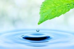 Wassertropfen, der vom gr?nen Blatt f?llt lizenzfreie stockfotos