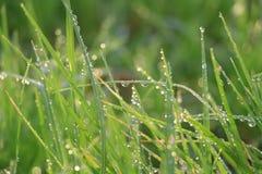 Wassertropfen des grünen Grases befeuchten Naturhintergrund lizenzfreie stockbilder