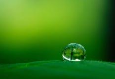 Wassertropfen im Schatten des Grüns Lizenzfreie Stockbilder