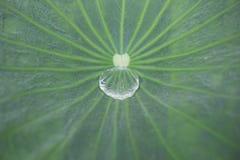 Wassertropfen innerhalb des Blattes Lizenzfreie Stockbilder