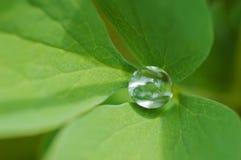 Wassertropfen innerhalb des grünen Blattes Stockbilder