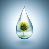 Wassertropfen mit Baum nach innen Lizenzfreie Stockfotos