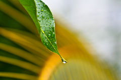 Wassertropfen nach Regen. Lizenzfreies Stockfoto