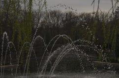 Wassertropfen am Park lizenzfreies stockfoto