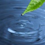 Wassertropfen vom grünen Blatt Stockfotos