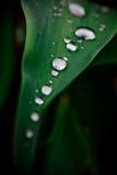 Wassertropfen vom Regen Stockfotos