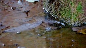 Wassertropfen von der alten Wasserleitung stock footage