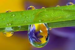 Wassertröpfchen, Wildflowers und ein Blatt des Grases Lizenzfreies Stockfoto