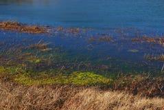 Wasserunkräuter und duckweeds, die auf Rändern von Sumpfgebieten und von Sümpfen, Yunnan, Porzellan, åœ¨äº 'å  wachsen — æ› ² é  lizenzfreies stockbild