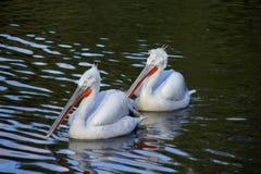 Wasservögel Stockbild