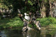 Wasservögel Lizenzfreies Stockfoto