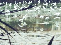 Wasservögel auf dem Fluss lizenzfreies stockbild