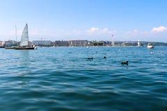 Wasservögel und Ufergegend an der Stadt von Genf Stockbild