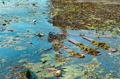 Wasserverschmutzung, Abfall in der Natur, Verschmutzung der Umwelt Lizenzfreies Stockbild