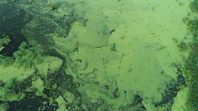 Wasserverschmutzungs-Ökologiefliegen über grünem Sumpf stock video footage
