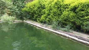Wasserwellen im Teich mit Windton stock footage