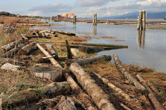 Waste. Logs on the river-bank stock images