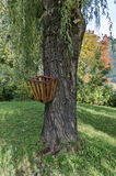 Waste basket on tree stem in park Stock Photography