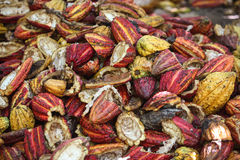 Waste from cocoa pods Stock Photos