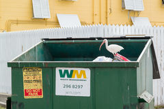 Waste container with ibis, Florida Keys stock photography