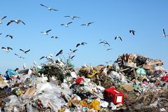 Waste Disposal Dump and Birds. Waste disposal site with seagulls and herons scavenging for food Royalty Free Stock Photography
