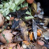 Waste food in a compost bin royalty free stock photo