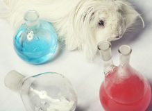 Waste products in laboratory, medicine-glass with Royalty Free Stock Photo