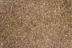 Waste sawdust background. Royalty Free Stock Photography