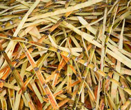 Waste from sugar production - sugar cane peels Stock Image