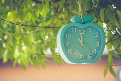 Waste of Time Concept : Alarm clock hanging on green branches tree. Stock Photos