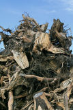 waste trä Arkivbild