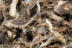 waste trä Royaltyfria Foton