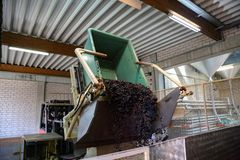 Harvesting of grapes. Waste transportation at the winery / Unloading of the harvested grapes at the winery Stock Images
