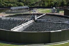 waste vatten för växt Arkivbilder
