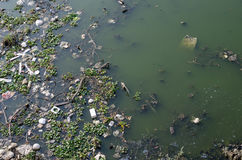 Waste water. Dirty water have many float garbage Royalty Free Stock Photography