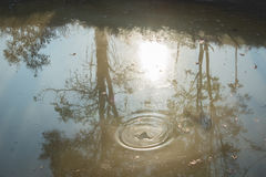 Waste water. Shadow of the tree is reflect in the waste water Stock Image
