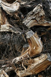 Waste wood Royalty Free Stock Photography