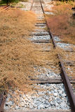 Wasteful railway. With dry plant that tried to growing above railway Stock Photos