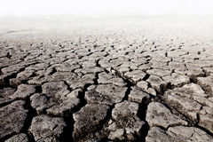Wasteland. Land with dry cracked ground stock photo