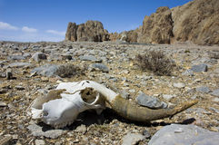 Wasteland. Dead animal on wasteland photo Royalty Free Stock Photography