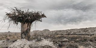 Wasteland Stock Image