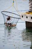 Waszyngtoński crabbing zdjęcie royalty free