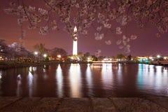 Waszyngtoński pomnik iluminujący przy nocą z czereśniowym okwitnięciem rozmytym wiatrem, odbija w wodzie Pływowy basen obrazy royalty free