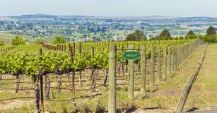 Waszyngtoński winnica w wiośnie Obraz Stock