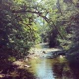 Waszyngtoński Forrest Zdjęcie Royalty Free