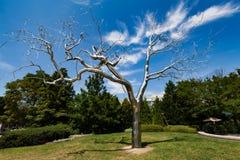 WASZYNGTON, DC - metalu drzewo w national gallery sztuki rzeźby ogród Obrazy Stock