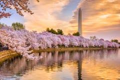 Waszyngton dc wiosna Zdjęcia Stock